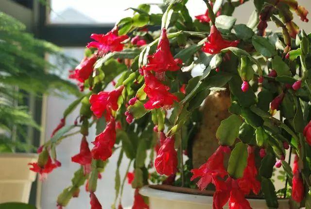 100种·花卉植物图谱_25