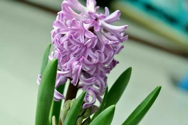 100种·花卉植物图谱_30