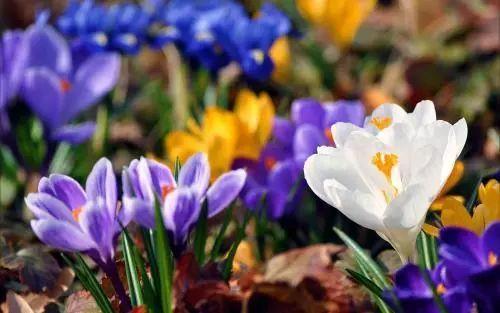 100种·花卉植物图谱_28