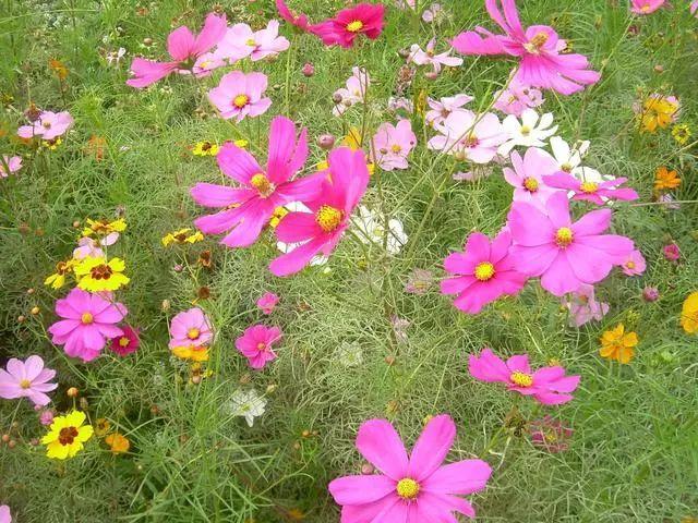 100种·花卉植物图谱_31