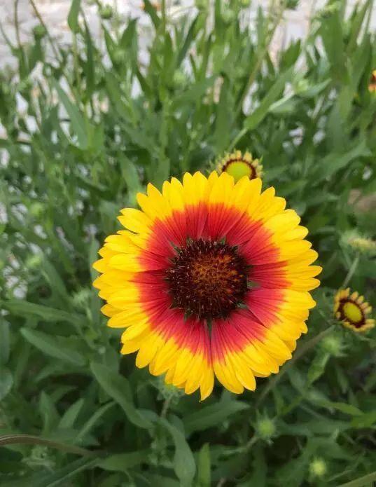 100种·花卉植物图谱_35