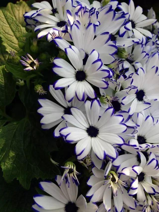 100种·花卉植物图谱_34