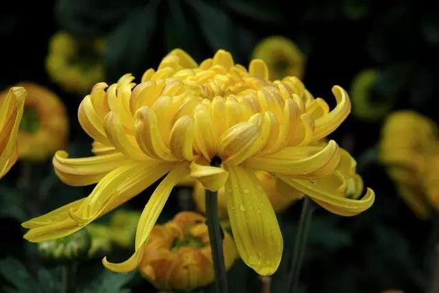 100种·花卉植物图谱_32