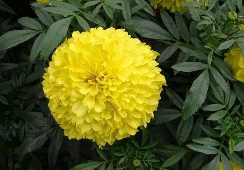 100种·花卉植物图谱_36