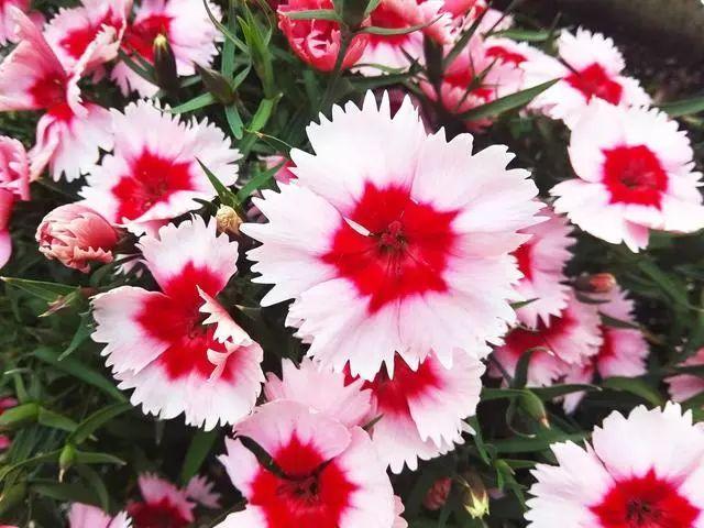 100种·花卉植物图谱_39
