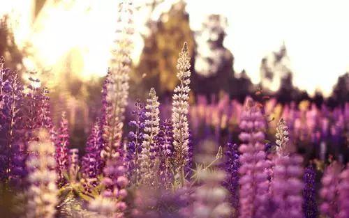 100种·花卉植物图谱_42