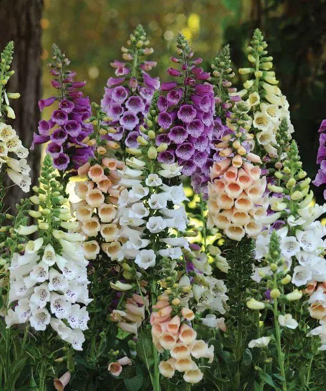 100种·花卉植物图谱_41