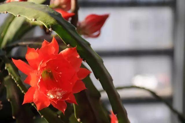 100种·花卉植物图谱_44