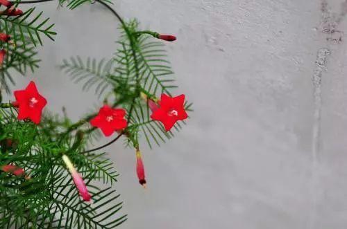 100种·花卉植物图谱_50