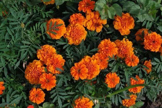 100种·花卉植物图谱_54