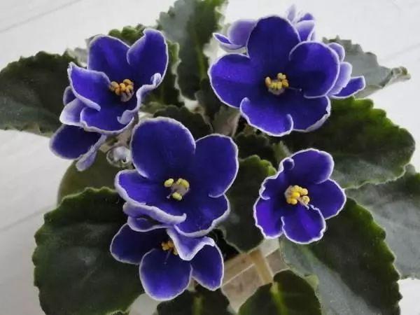 100种·花卉植物图谱_55