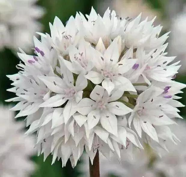 100种·花卉植物图谱_61