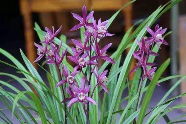 100种·花卉植物图谱_59