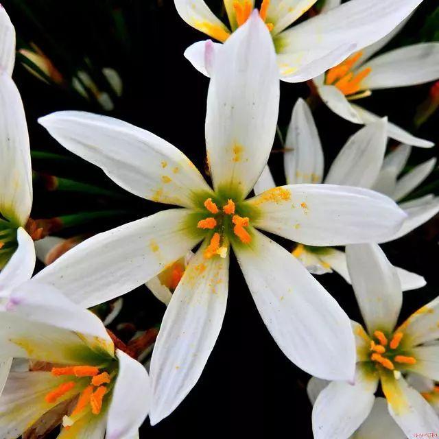 100种·花卉植物图谱_62