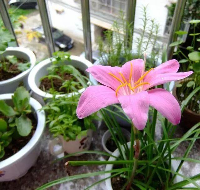 100种·花卉植物图谱_63