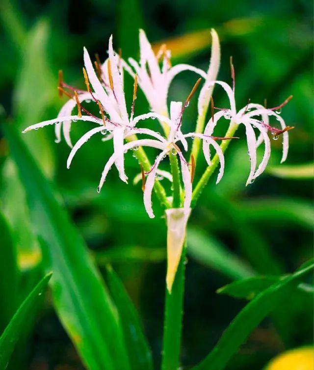 100种·花卉植物图谱_65