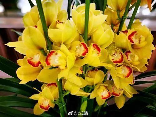 100种·花卉植物图谱_66