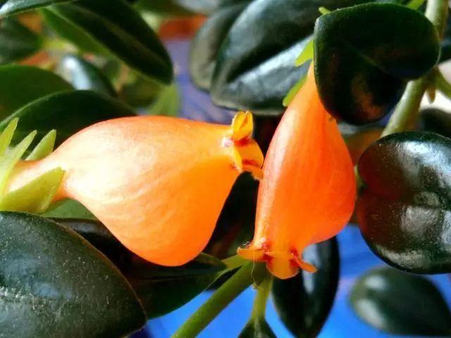 100种·花卉植物图谱_71
