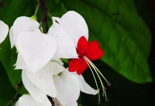 100种·花卉植物图谱_70