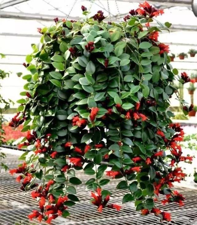 100种·花卉植物图谱_72