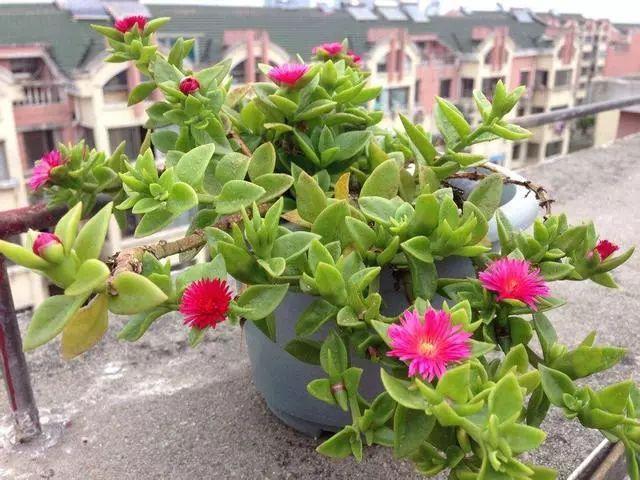 100种·花卉植物图谱_73