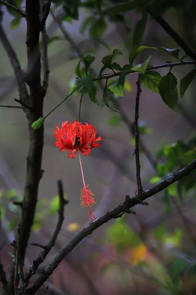100种·花卉植物图谱_75