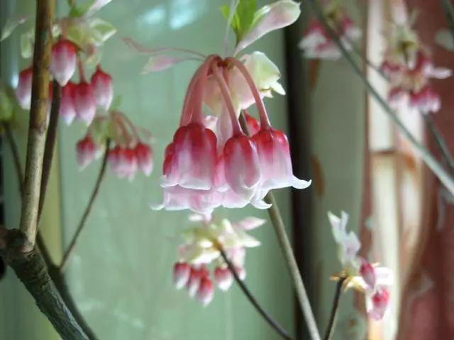 100种·花卉植物图谱_77