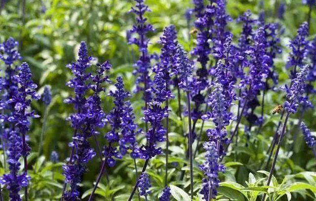 100种·花卉植物图谱_81