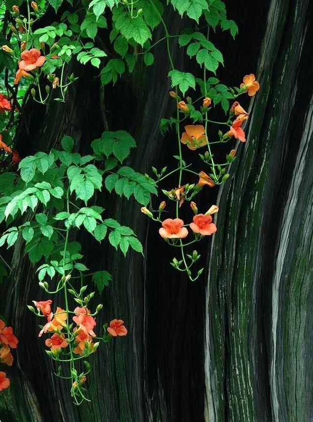 100种·花卉植物图谱_85