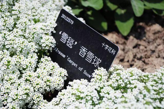 100种·花卉植物图谱_87