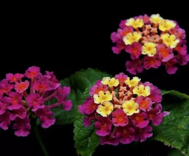 100种·花卉植物图谱_86