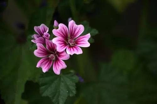 100种·花卉植物图谱_89