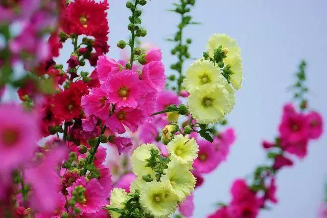 100种·花卉植物图谱_90