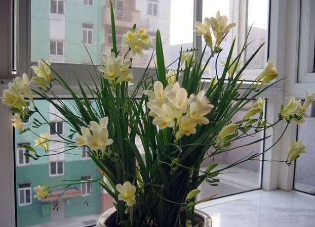 送给那些养花,却总是把花养死的人_46