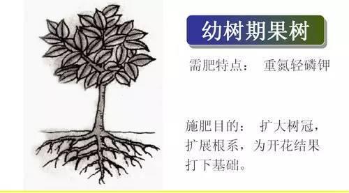 超全植物肥料知识,建议收藏!_8