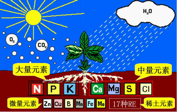 超全植物肥料知识,建议收藏!_5
