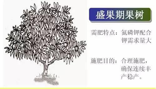 超全植物肥料知识,建议收藏!_10