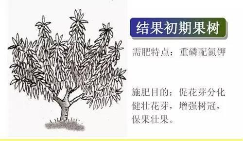 超全植物肥料知识,建议收藏!_9