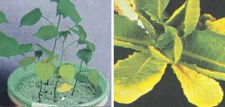 超全植物肥料知识,建议收藏!_14