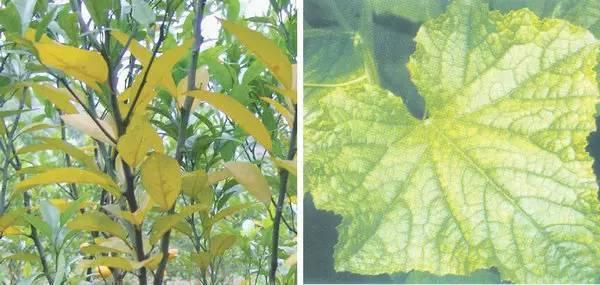 超全植物肥料知识,建议收藏!_13