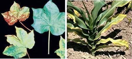 超全植物肥料知识,建议收藏!_18
