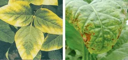 超全植物肥料知识,建议收藏!_17