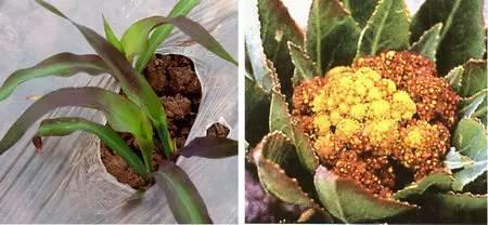 超全植物肥料知识,建议收藏!_16
