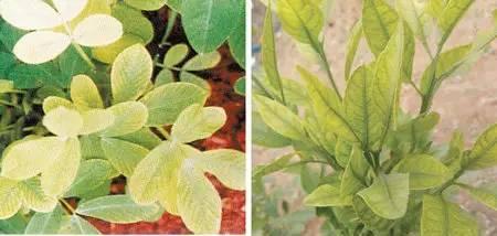 超全植物肥料知识,建议收藏!_24