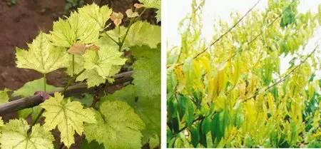 超全植物肥料知识,建议收藏!_25