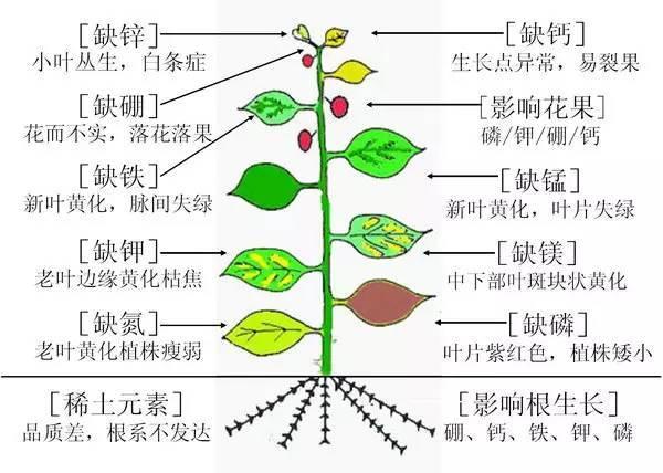 超全植物肥料知识,建议收藏!_30