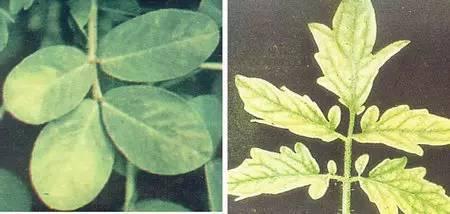 超全植物肥料知识,建议收藏!_29