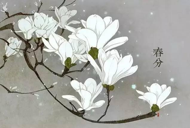 24节气·专属花卉植物,四季芳香!_4