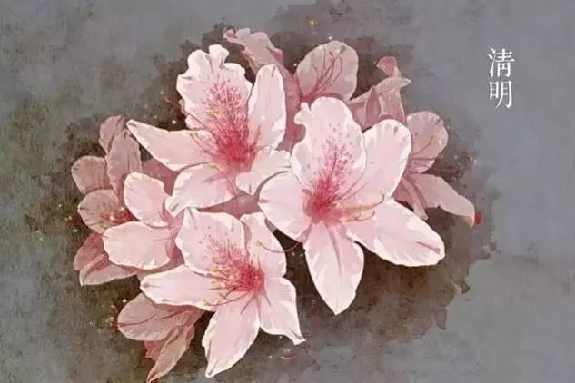 24节气·专属花卉植物,四季芳香!_5