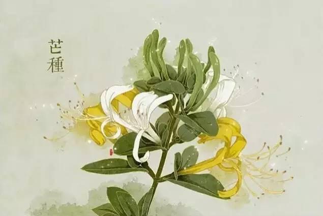 24节气·专属花卉植物,四季芳香!_9